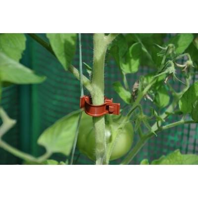 Foto van Royal Well Tomatenclips